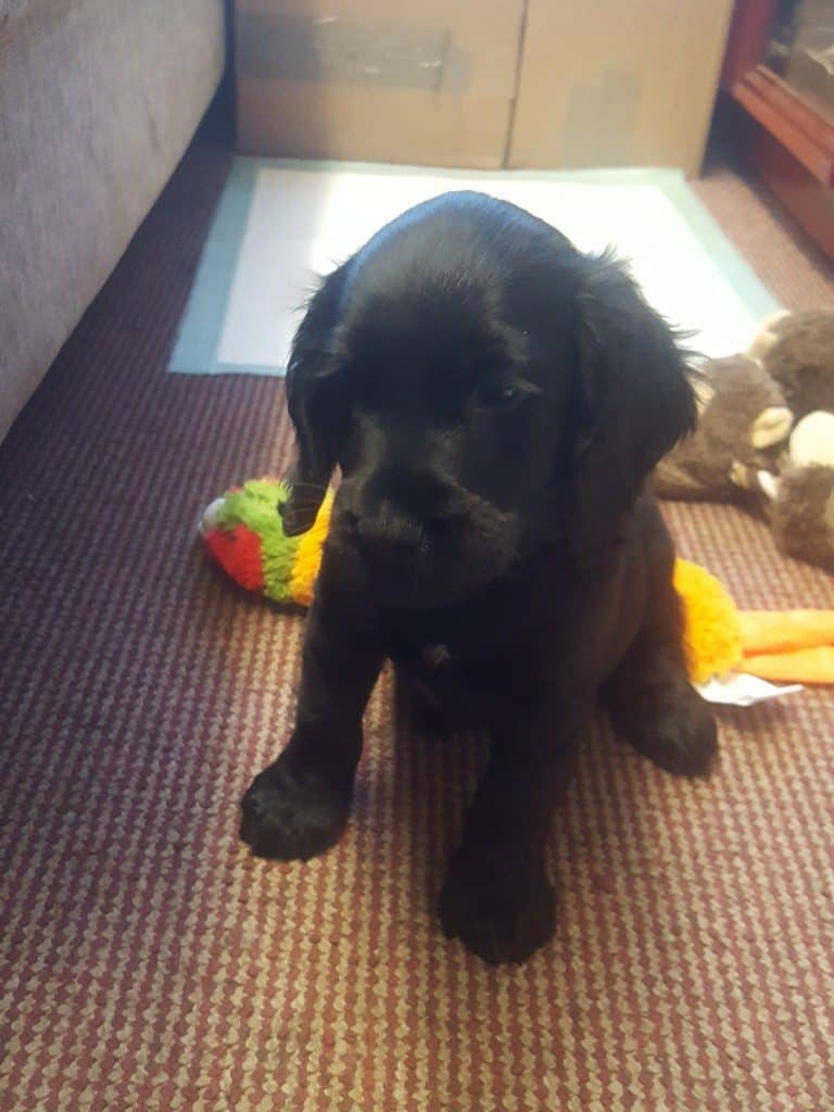 Another new addition to the JWMC Team 'Mr Percy'